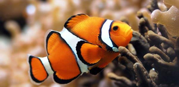 cá cảnh sinh sản