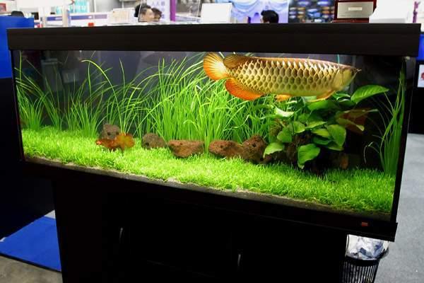hồ nuôi cá rồng